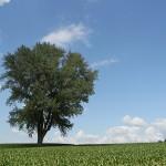 今日の哲学の木