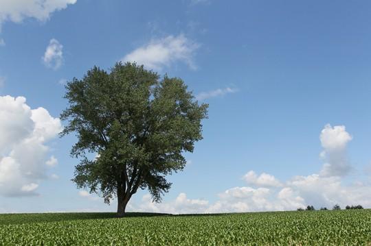 2014年7月5日の哲学の木